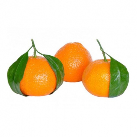 نارنگی | جی شاپ
