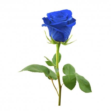 گل رز آبی 1 شاخه | جی شاپ