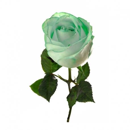 گل رز سبز 1 شاخه | جی شاپ