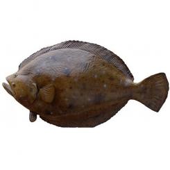 ماهی کفشک تازه کیلویی