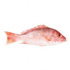 ماهی سرخو صبیتی تازه کیلویی