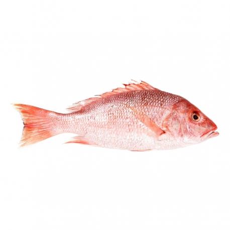 ماهی سرخو صبیتی تازه کیلویی   جی شاپ