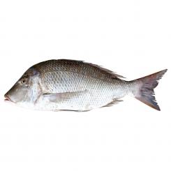 ماهی سنگسر شعری شهری تازه کیلویی
