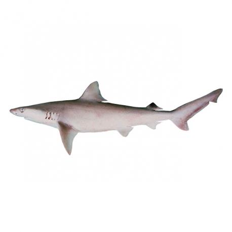 ماهی کوسه کولی تازه کیلویی | جی شاپ